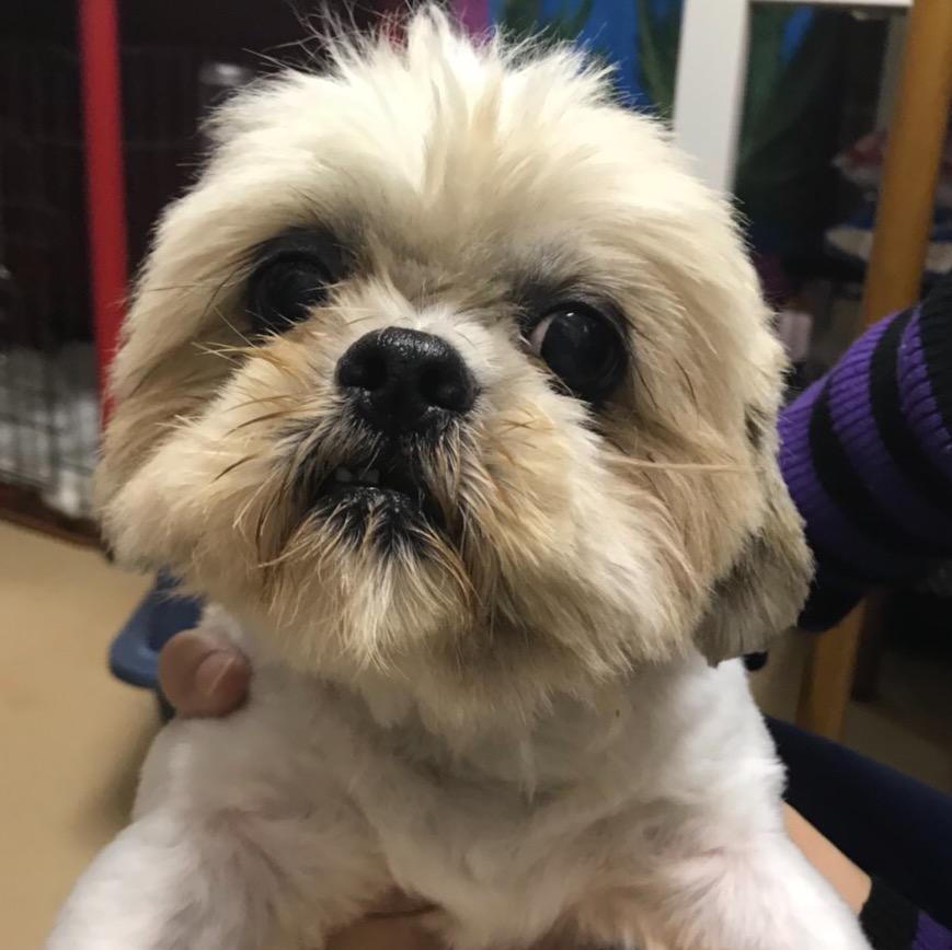保護犬カフェ天神橋 川西店11月30日 木 のキャスト